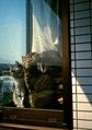 necobitter『日めくり猫ら』まとめ 2011年6月分klasse_s_4