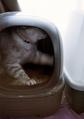 necobitter『日めくり猫ら』まとめ 2011年6月分klasse_s_6