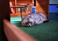 necobitter『日めくり猫ら』まとめ 2011年6月分klasse_s_7
