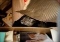 necobitter『日めくり猫ら』まとめ 2011年6月分klasse_s_8