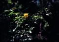 FUJIFILM KLASSE S『5月のきらきら百草園 その2』4