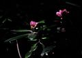 FUJIFILM KLASSE S『5月のきらきら百草園 その3』6
