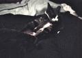日めくり猫ら番外編・その他らくがき写真まとめ 2011年6月分2