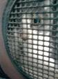 日めくり猫ら番外編・その他らくがき写真まとめ 2011年6月分4