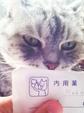 日めくり猫ら番外編・その他らくがき写真まとめ 2011年6月分8