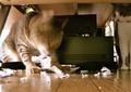 日めくり猫ら番外編・その他らくがき写真まとめ 2011年6月分10