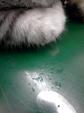 日めくり猫ら番外編・その他らくがき写真まとめ 2011年6月分14