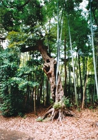 竹 in 木2