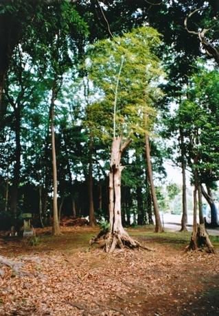 竹 in 木3