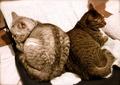 necobitter『日めくり猫ら』まとめ 2011年7月分AGFA Sensor 830s_1