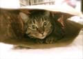 necobitter『日めくり猫ら』まとめ 2011年7月分AGFA Sensor 830s_4
