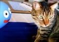 necobitter『日めくり猫ら』まとめ 2011年7月分AGFA Sensor 830s_6
