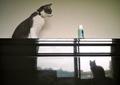 necobitter『日めくり猫ら』まとめ 2011年7月分Polaroid a520_1