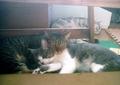 necobitter『日めくり猫ら』まとめ 2011年7月分Polaroid a520_2