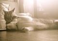 necobitter『日めくり猫ら』まとめ 2011年7月分Polaroid a520_3