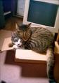 necobitter『日めくり猫ら』まとめ 2011年7月分Polaroid a520_4