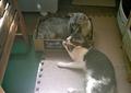 necobitter『日めくり猫ら』まとめ 2011年7月分Polaroid a520_6