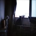 necobitter『日めくり猫ら』まとめ 2011年7月分lomo Diana mini