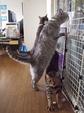 necobitter『日めくり猫ら』まとめ 2011年7月分Olympus E-520_1