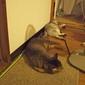 necobitter『日めくり猫ら』まとめ 2011年7月分Olympus E-520_2