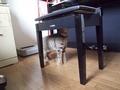 necobitter『日めくり猫ら』まとめ 2011年7月分Olympus E-520_3