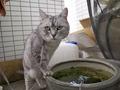 necobitter『日めくり猫ら』まとめ 2011年7月分Olympus E-520_5