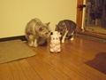 necobitter『日めくり猫ら』まとめ 2011年7月分Olympus E-520_6