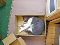 necobitter『日めくり猫ら』まとめ 2011年7月分Olympus E-520_8