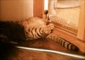 necobitter『日めくり猫ら』まとめ 2011年7月分Polaroid izone 550