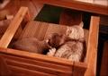 necobitter『日めくり猫ら』まとめ 2011年7月分FUJIFILM KLASSE S_1