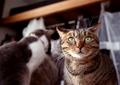 necobitter『日めくり猫ら』まとめ 2011年7月分FUJIFILM KLASSE S_2
