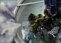 necobitter『日めくり猫ら』まとめ 2011年7月分FUJIFILM KLASSE S_3