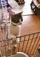 necobitter『日めくり猫ら』まとめ 2011年7月分FUJIFILM KLASSE S_4