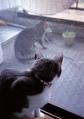 necobitter『日めくり猫ら』まとめ 2011年7月分FUJIFILM KLASSE S_7