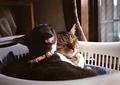 necobitter『日めくり猫ら』まとめ 2011年7月分FUJIFILM KLASSE S_8
