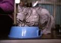 necobitter『日めくり猫ら』まとめ 2011年7月分FUJIFILM KLASSE S_9