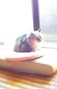 日めくり猫ら番外編・その他らくがき写真まとめ 2011年7月分7