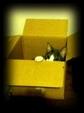日めくり猫ら番外編・その他らくがき写真まとめ 2011年7月分10