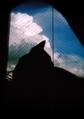 necobitter『日めくり猫ら』まとめ 2011年8月分polaroid_a520_1