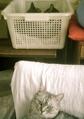 necobitter『日めくり猫ら』まとめ 2011年8月分polaroid_a520_2
