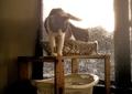 necobitter『日めくり猫ら』まとめ 2011年8月分polaroid_a520_3