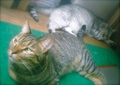 necobitter『日めくり猫ら』まとめ 2011年8月分polaroid_a520_4