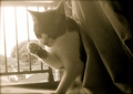 necobitter『日めくり猫ら』まとめ 2011年8月分polaroid_a520_5