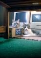 necobitter『日めくり猫ら』まとめ 2011年8月分polaroid_a520_6