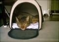 necobitter『日めくり猫ら』まとめ 2011年8月分polaroid_a520_8