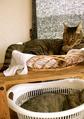 necobitter『日めくり猫ら』まとめ 2011年8月分agfa_sensor830s_1