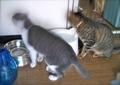 necobitter『日めくり猫ら』まとめ 2011年8月分agfa_sensor830s_2