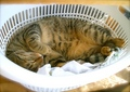 necobitter『日めくり猫ら』まとめ 2011年8月分agfa_sensor830s_3