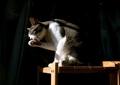 necobitter『日めくり猫ら』まとめ 2011年8月分agfa_sensor830s_5