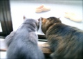 necobitter『日めくり猫ら』まとめ 2011年8月分agfa_sensor830s_6